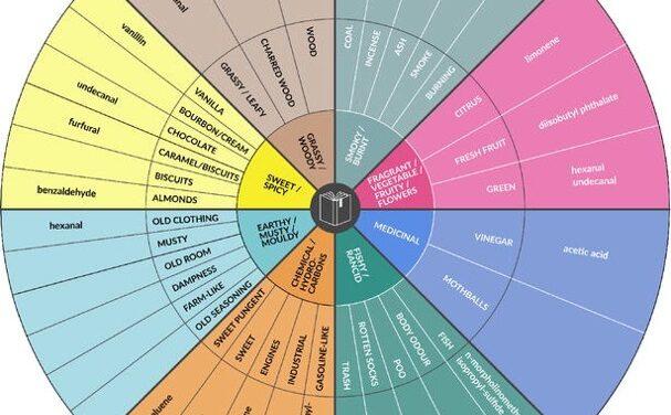Classificare l'esperienza olfattiva: cosa sente il nostro naso